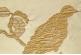 Ткань Botticelli 22, 23, 26, 27, 30