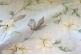Ткань арт. Tropicana 31, 35, 37, 41, 43